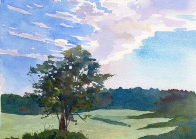 Cushing meadow